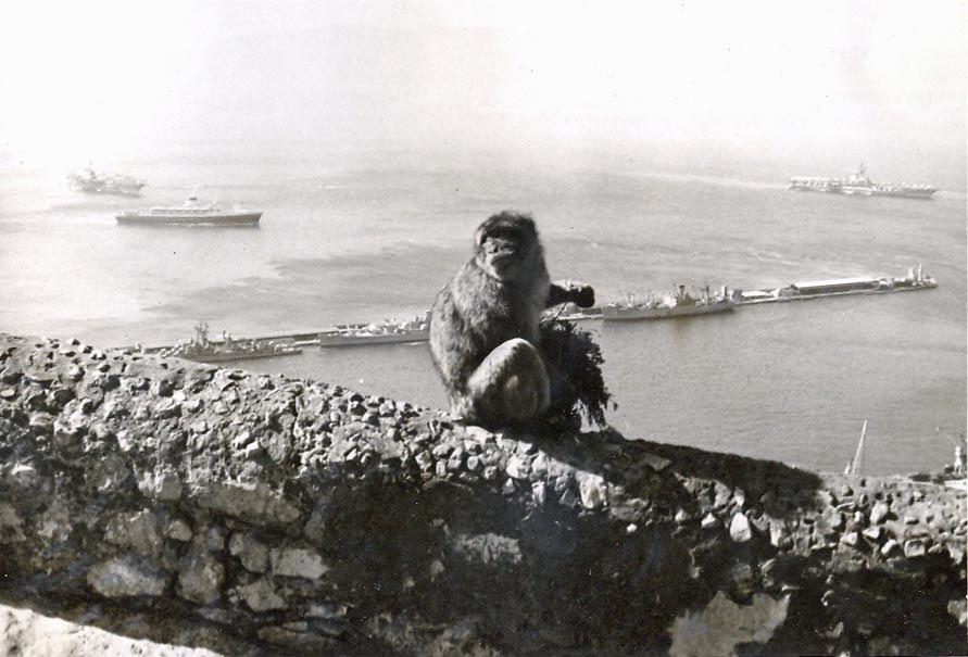 p-002-gibralter-rock-ape