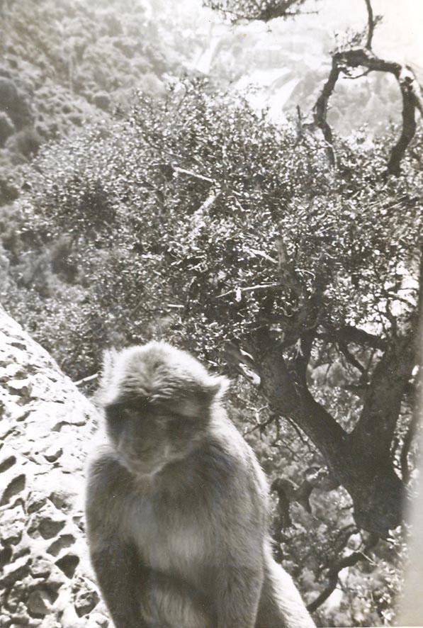 p-003-rock-ape