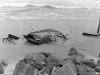 dscn0614-mayport-jacksonville-beach-florida-fdr-1971-wl