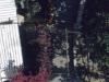 104-aug61-cannesnice-capri